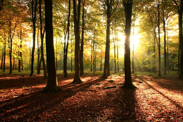 sunny-woodland
